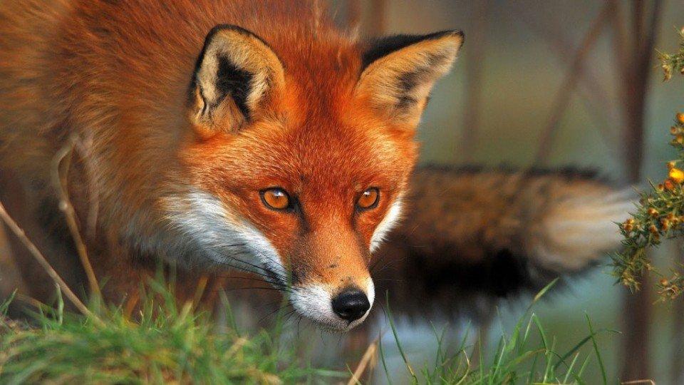 Дополнения Firefox - Pearltrees