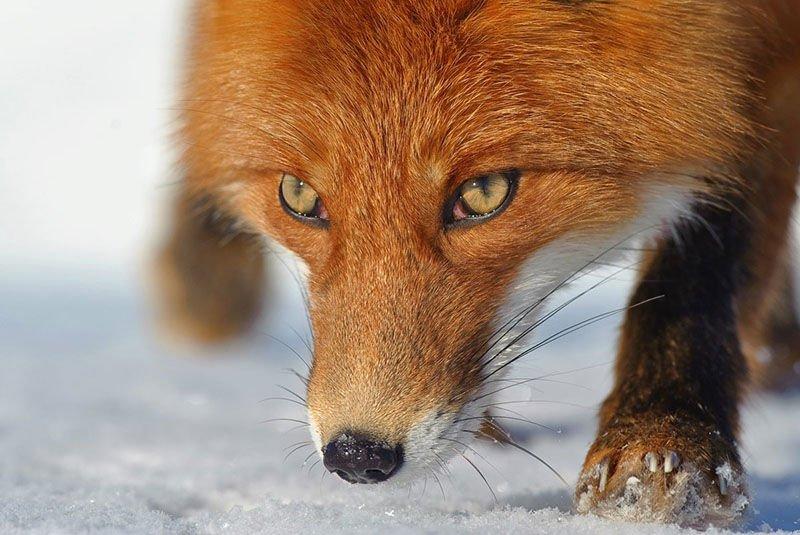 Mozilla Firefox 32 получит усовершенствованный менеджер паролей