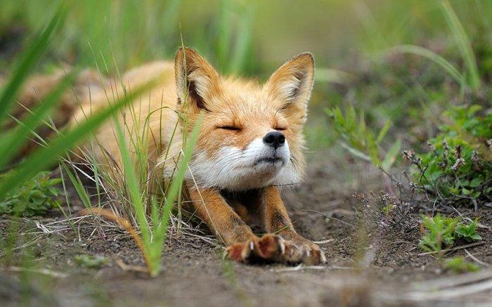 """C:\Users\Александр\Desktop\4 дополнения для сокращения ссылок - Firefox .jpg"""