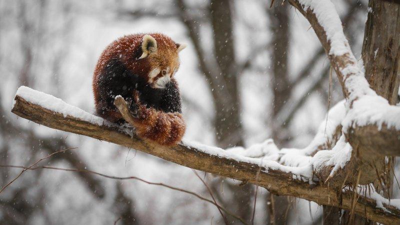 Как настроить плавную прокрутку в Firefox
