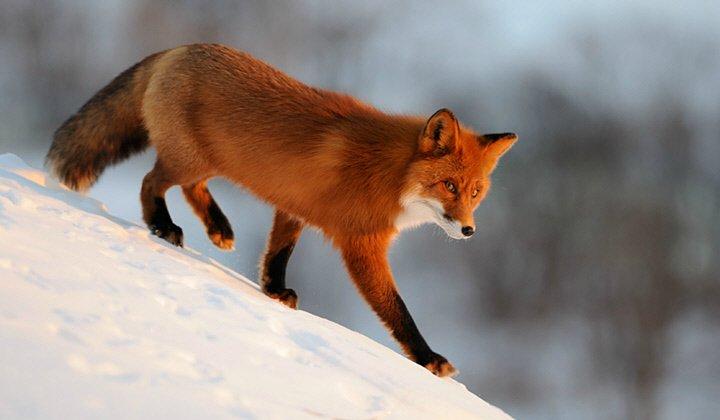 Real Firefox